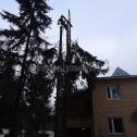 Спиливание деревьев в Московской области