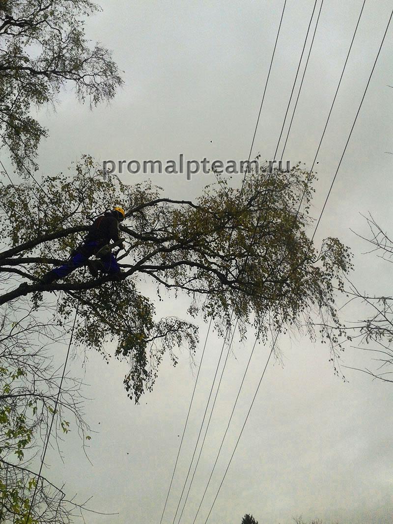 Удаление веток над проводами